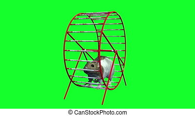 hamster and wheel