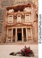 Camel near Treasury - Slipping Camel near Treasury, Petra