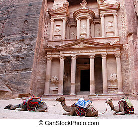 Camels in Petra - Slipping Camels near Treasury, Jordan