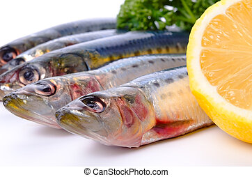 sardine - Cooking ingredient series sardine. for adv etc. of...