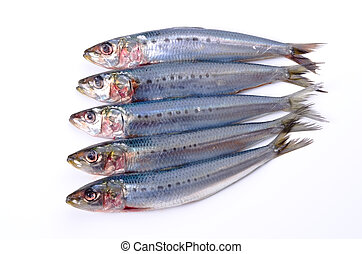 sardine - Cooking ingredient series sardine. available for...