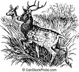 Deer cervus nippon - Deers cervus nippon standing in the...