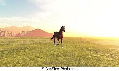 horse at ranch