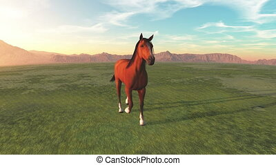 horse at ranch