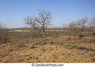gujarat landscape - a dry arid indian landscape with trees...