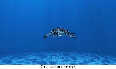 sea turtle - image of sea turtle