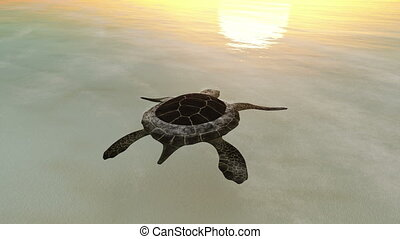sea turtle - image of sea turtle