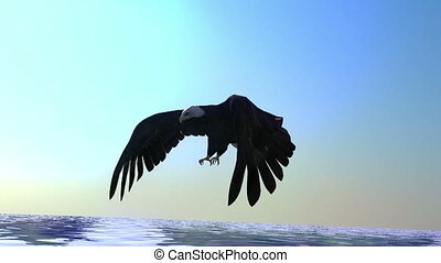 bald eagle and sea