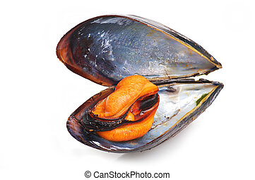 black mussel close up on white background