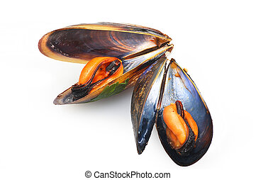 black mussels close up on white background