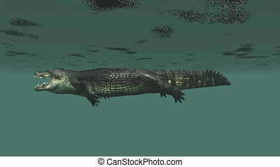 crocodile - image of crocodile