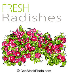 Fresh Radishes - An image of a fresh radishes.