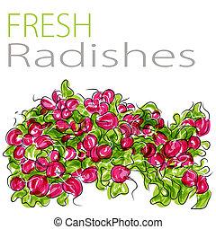 Fresh Radishes - An image of a fresh radishes.