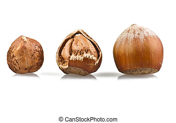 open hazelnut on white background