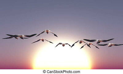 migratory birds - image of migratory birds