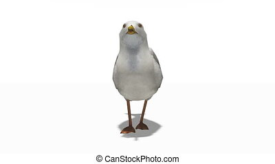 gull - image of gull