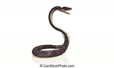 cobra - image of cobra