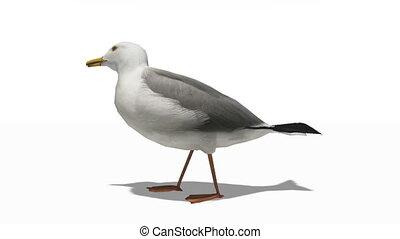 gull - image of gull