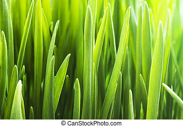 background  - The background of fresh green grass