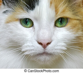 Face of a pretty green eyed long haired calico cat