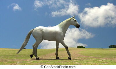 white horse in nature