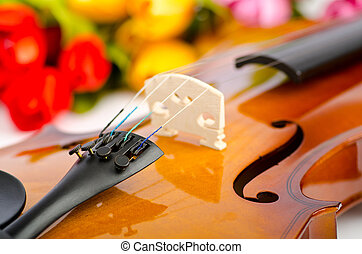 Violin and tulip flowers on white