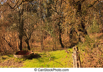 Background of trees and grass and wild vegetation under sunlight