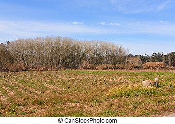 Blue sky over green plain field and forest on Portugal