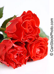 Beautiful red roses on a white background