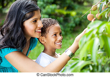 mother and son looking at litchis - happy young mother and...