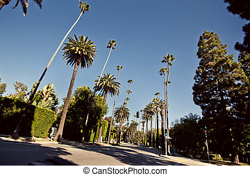 Palm streets of Beverly Hills, Los Angeles, California