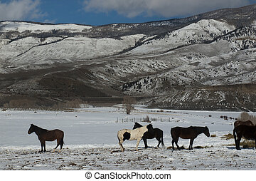 Horses grazing on a winter day.