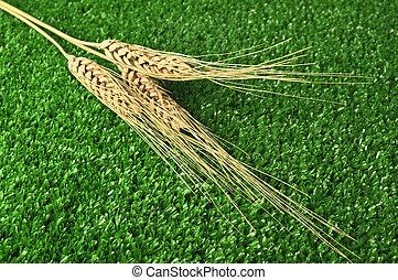 tres, campo, maíz, cierre, Arriba