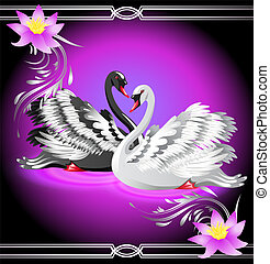 White and black swan and lilies - Elegant white and black...