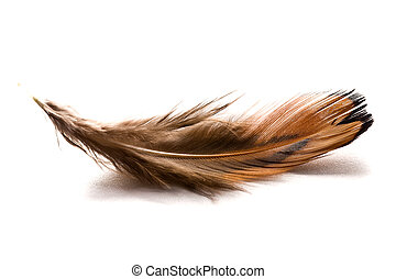 brown feather - the brown feather on white background