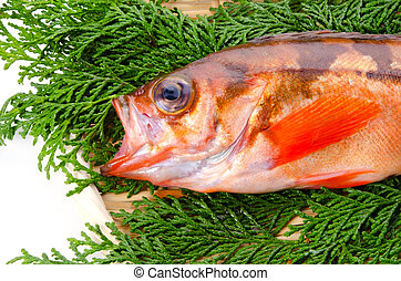 goldeye rockfish - Cooking ingredient series goldeye...