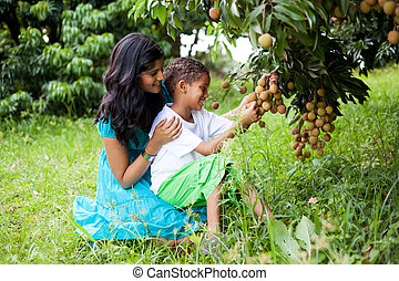 mother and son picking litchis - young happy mother and son...