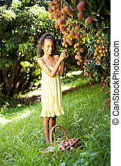 happy little girl picking litchis in orchard