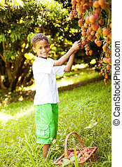 cute little boy picking lychees in orchard