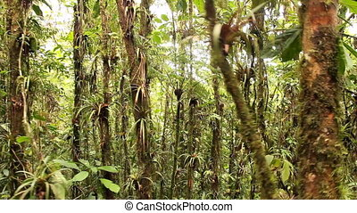 Walking through cloudforest - On top of the Coastal Range in...
