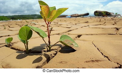 Tree seedling - growing in the bottom of a dried up pond on...