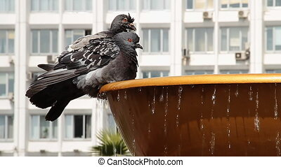 Fountain 040