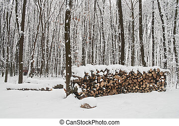 woodpile in winter forest - Woodpile in winter and forest...