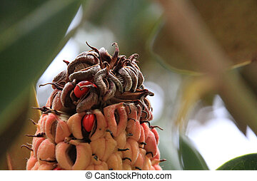 tropical tree seeds