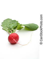 Radish of a white background
