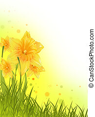 Daffodils - Flower background