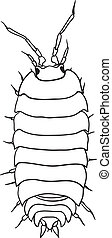 Woodlouse - monochrome vector drawing
