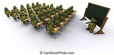 烏龜, 坐, 學校, 書桌