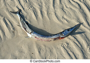 dead fish on beach from pollution
