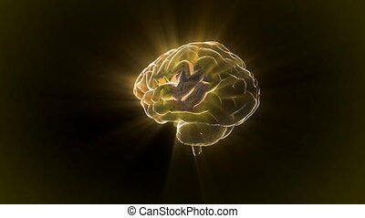 gold brain rotate flare - X-ray Brain to represent the theme...